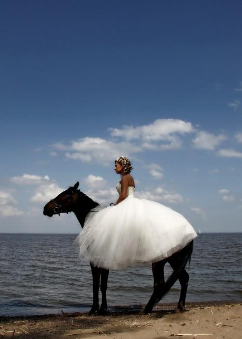свадебная прогулка на лошадях в СПб