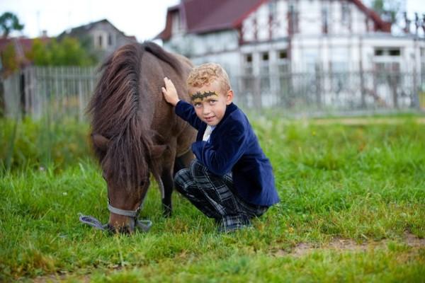 лошади и пони в СПб