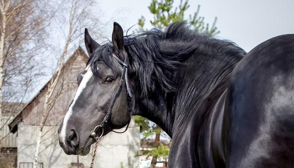 кони в Петергофе