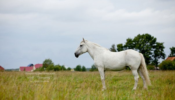 Покататься верхом на лошаде Радуга