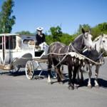 Свадьба и лошади