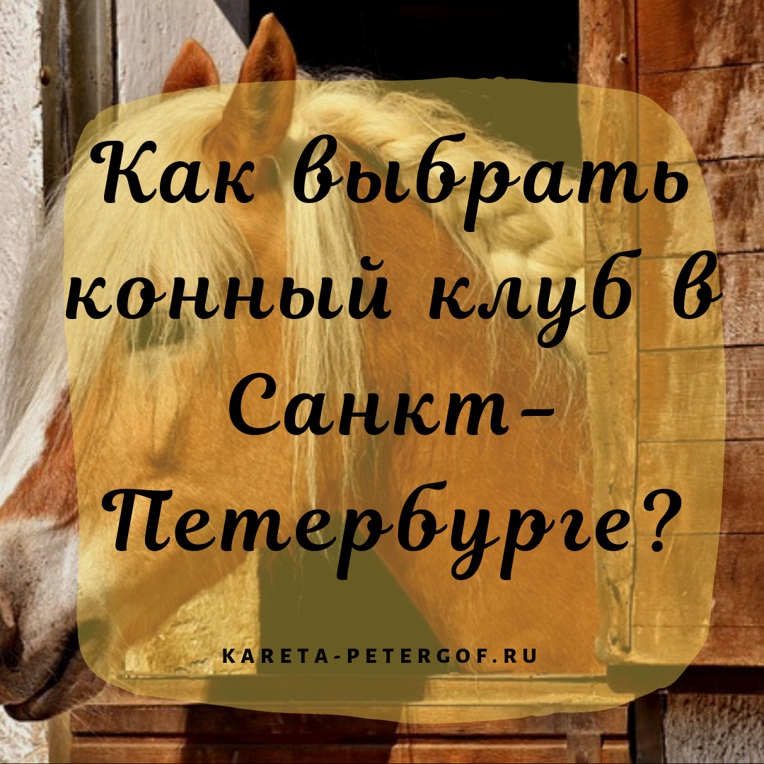 как выбрать конный клуб