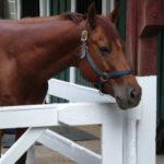 Как правильно выбрать конный клуб?