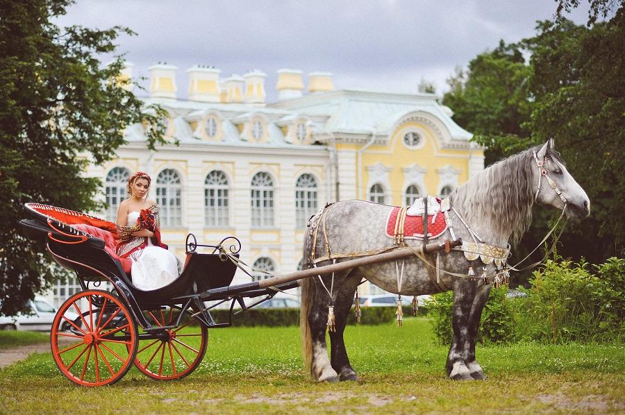 фотосессия для лошади
