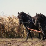 Лошади в нашей жизни. Часть вторая