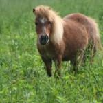 Лошади в гороскопе. Часть 2