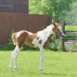 Лошади обыкновенные или оригинальные животные