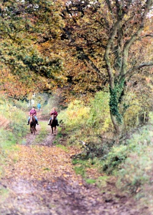 романтические прогулки на лошадях