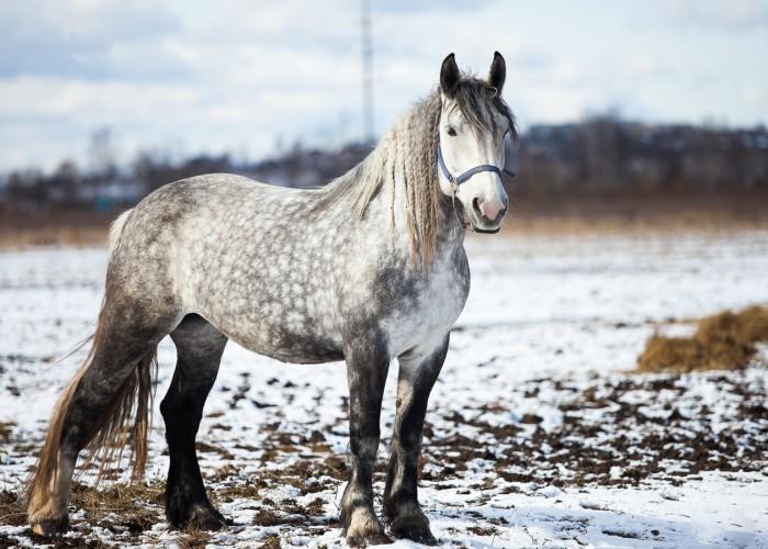 лошади для прогулок