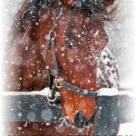 Зимние фотосессии с лошадьми