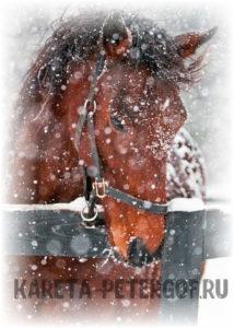 покататься на лошадях спб зимой