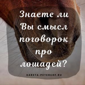 Знаете ли вы смысл поговорок про лошадей?