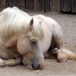 8 самых редких лошадиных пород