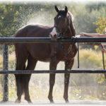 7 вещей, которые необходимо сделать, если вы любите лошадей