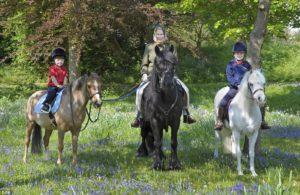 Покупать ли ребенку лошадь