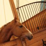 Как вы убедить своих родителей, чтобы они купили вам лошадь