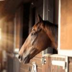 Советы по экономии на содержание лошади