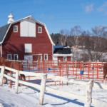 Здоровая лошадь в холодное время года