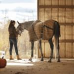 Уход за лошадьми в деталях