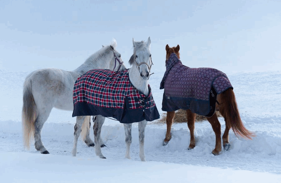 одежда для лошадей