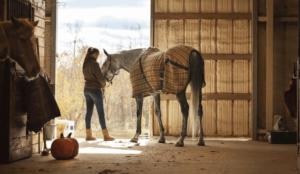 уход за лошадью