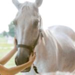 Причины внезапной смерти лошади