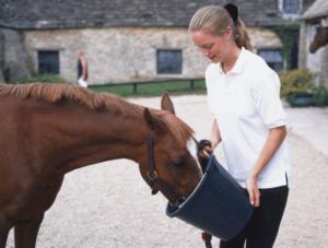 как набрать вес лошади