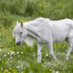 Почему лошадь теряет в весе?
