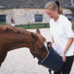 Как помочь лошади набрать вес