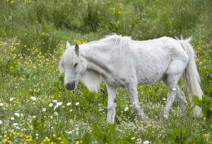 почему лошадь теряет в весе