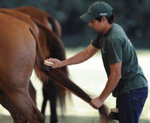 правила безопасности при чистке лошади