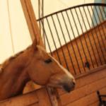 Часто задаваемые вопросы о покупке вашей первой лошади