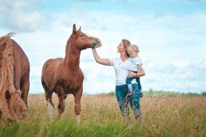 правила хорошего тона у лошадей