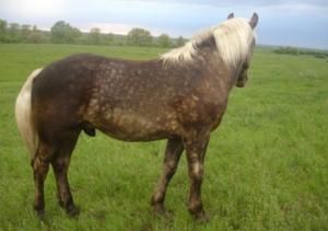 витилиго у лошадей