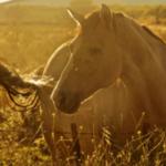 Аллергия у лошадей