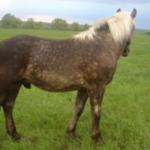 Заболевания кожи у лошадей