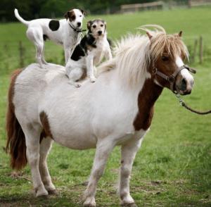 дружба лошади и собаки