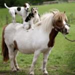 Нужен ли лошади товарищ?