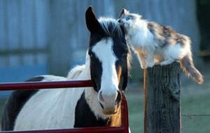 лошадь и кошка