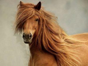 лошадь сама себя кормит