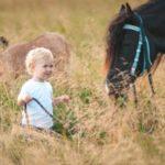 Какие лошади помогают в иппотерапии?