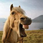 О лошадиных зубах