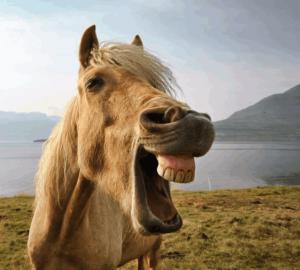 стресс у лошадей