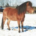 Подготовка лошадей к зимнему сезону