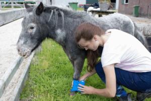 Как лечить 5 самых распространенных травм у лошадей