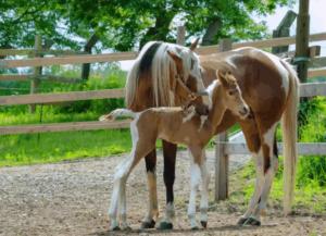 Почему у лошади длинная голова