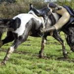 Что делать, если кто-то падает с лошади