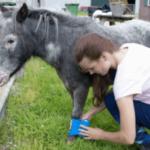 Как лечить 5 самых распространенных травм у лошадей?