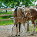 Почему у лошади длинная голова?
