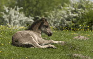 10 фактов о жеребятах